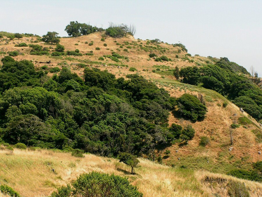 Angel Island - ExplorationVacation P5300152 hillside 1
