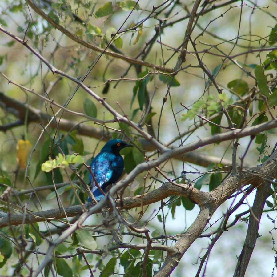 09-25_04-23-15 starling - ExplorationVacation