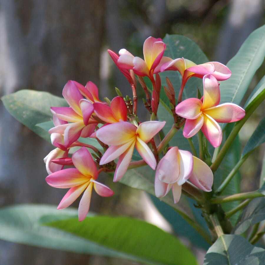 09-25_06-12-19 flowers at kubu - ExplorationVacation