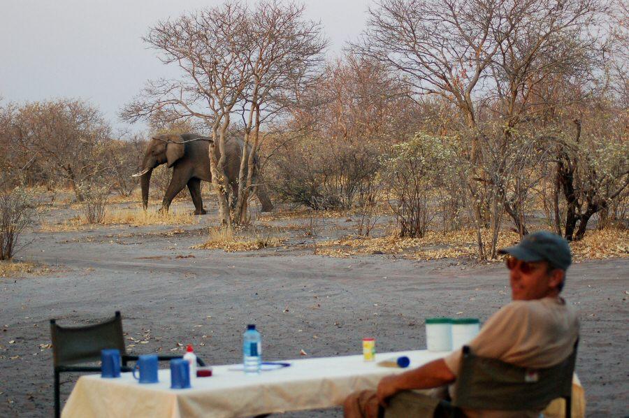 Botswana - ExplorationVacation -09-23_10-58-44 lane w elephant