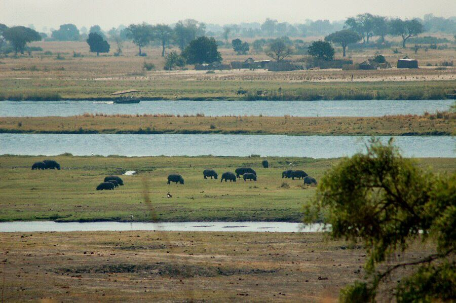 Botswana - ExplorationVacation 09-24_07-03-56 grazing hippos