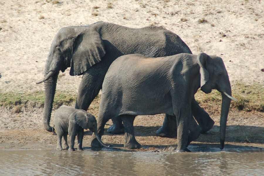 Botswana - ExplorationVacation 09-24_08-26-52 elephant family