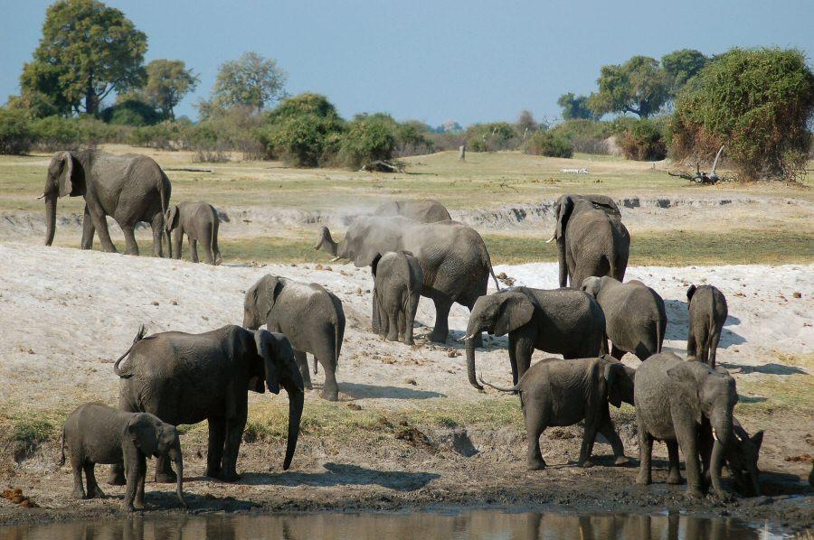 Botswana - ExplorationVacation 09-24_08-33-03 elephants.0