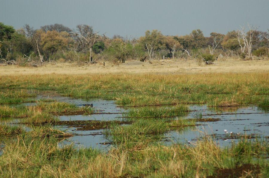 Botswana - ExplorationVacation - 2005-09-22_01-21-35 along the river