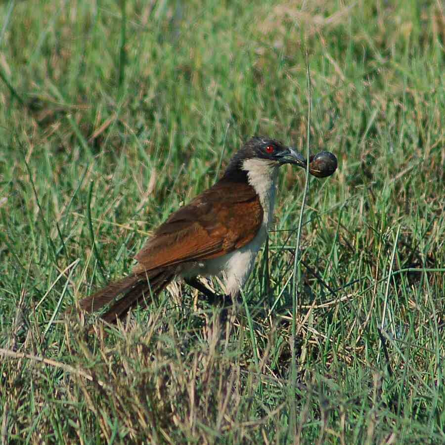 Botswana - ExplorationVacation - 2005-09-22_01-53-19 jacana