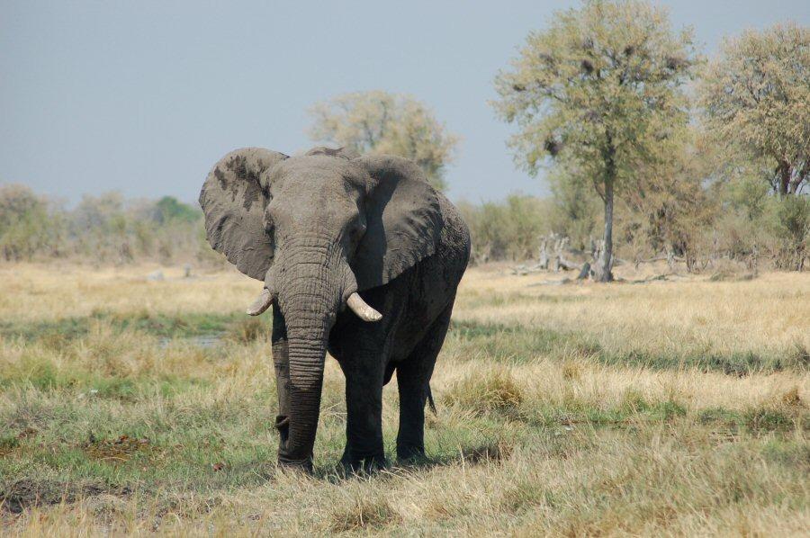 Botswana - ExplorationVacation - 2005-09-22_06-56-18