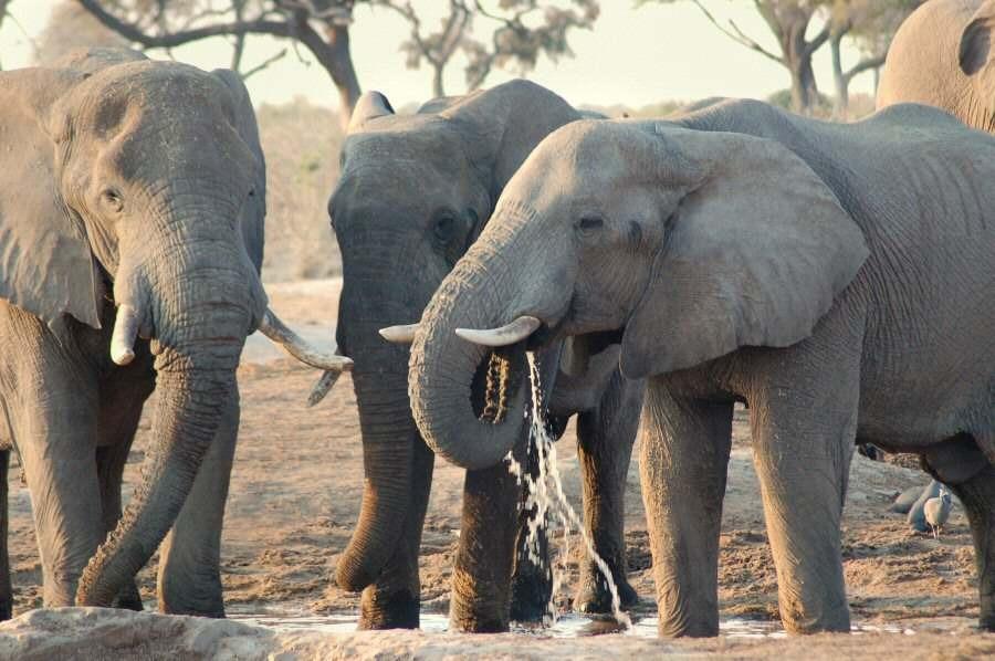 Botswana - ExplorationVacation - 2005-09-22_10-33-53 elephants at waterhole