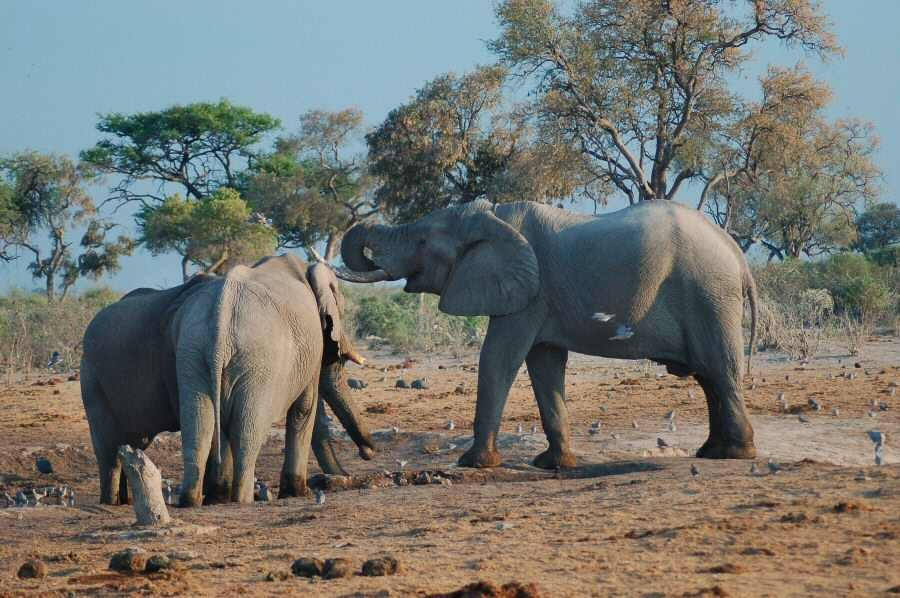 Botswana - ExplorationVacation - 2005-09-23_00-06-59 elephants at first waterhole