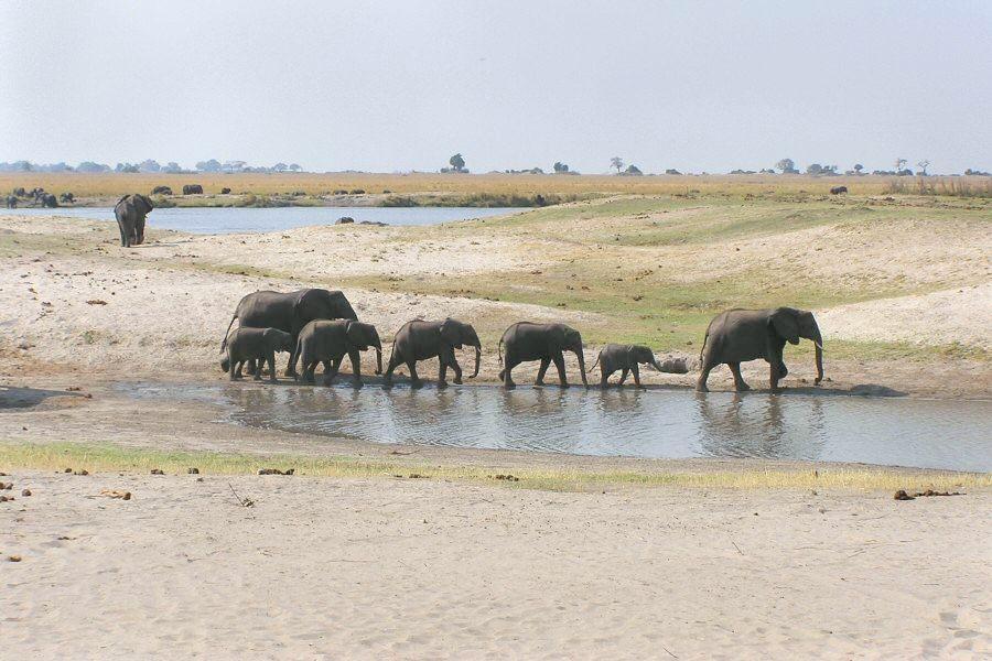 Botswana - ExplorationVacation P1010184 elephants