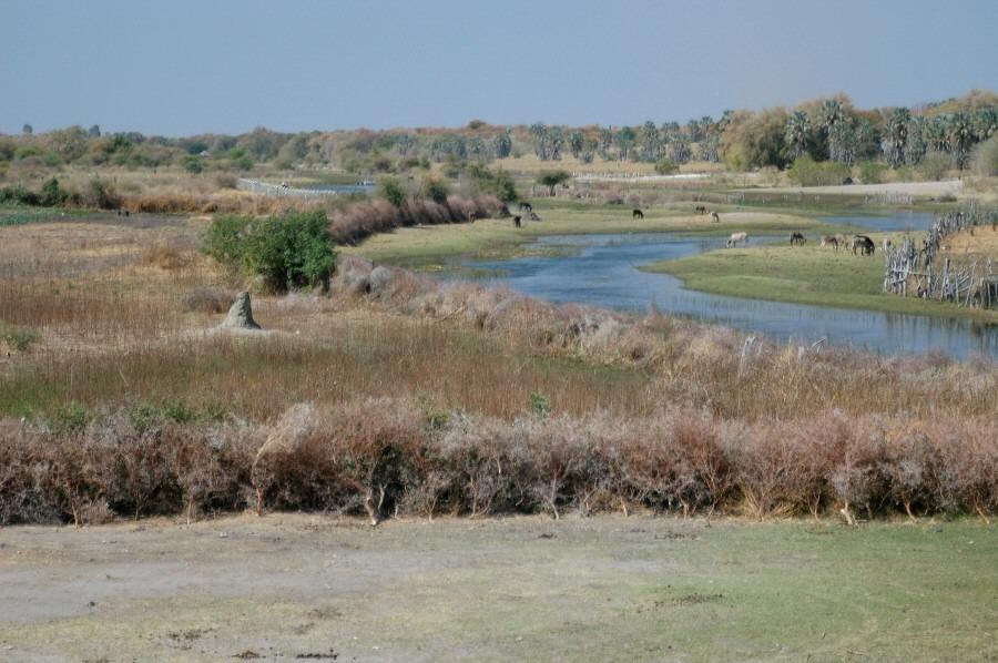 Botswana Moremi - ExplorationVacation - 09-20 river in Maun