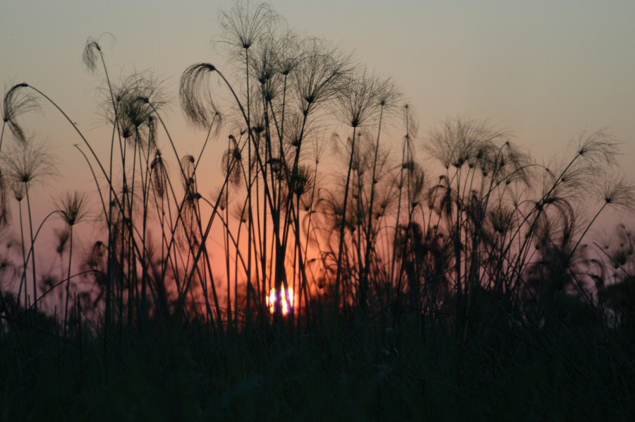 Botswana Okavango - ExplorationVacation - 09-18 sunset w papayrus