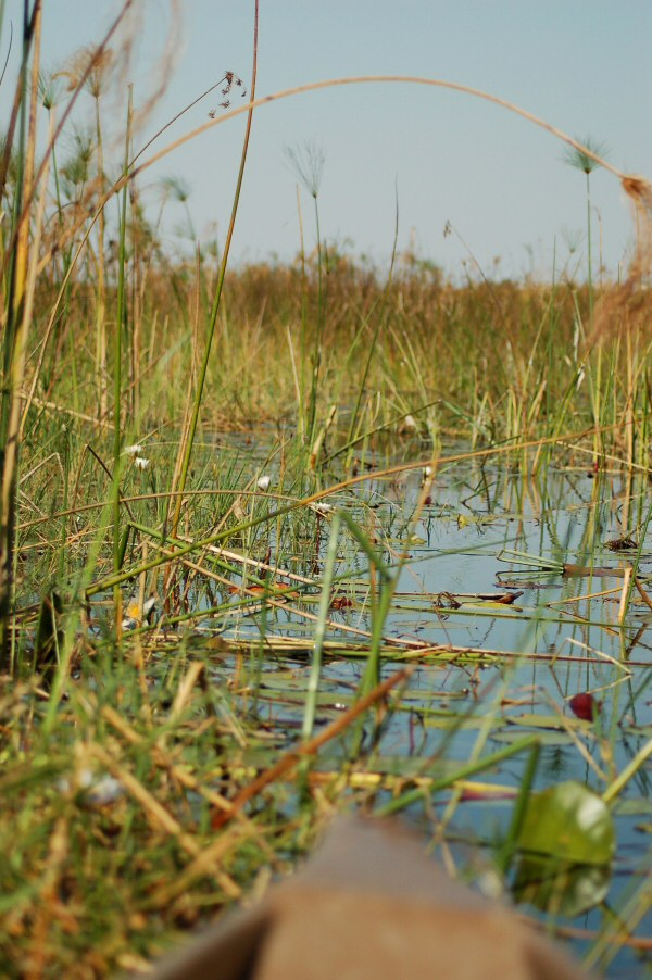 Botswana Okavango - ExplorationVacation - 09-18 view ahead