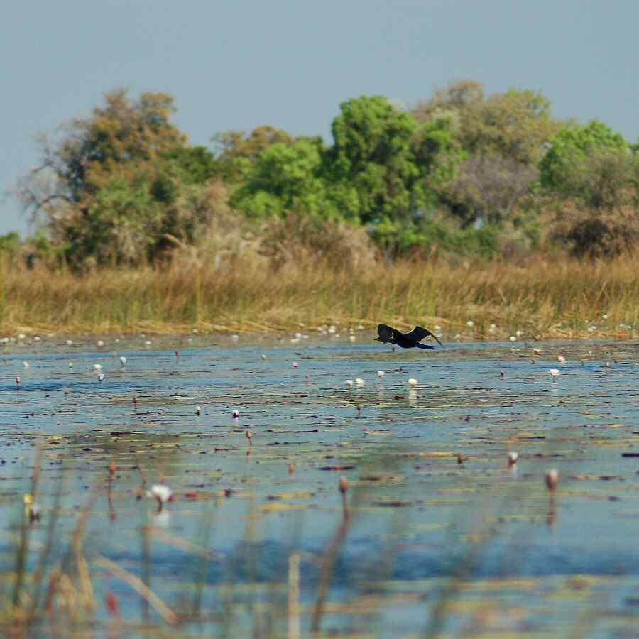Botswana Okavango - ExplorationVacation - 09-18_darter from mokoro