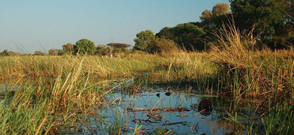 Botswana Okavango - ExplorationVacation - 09-19 poling back