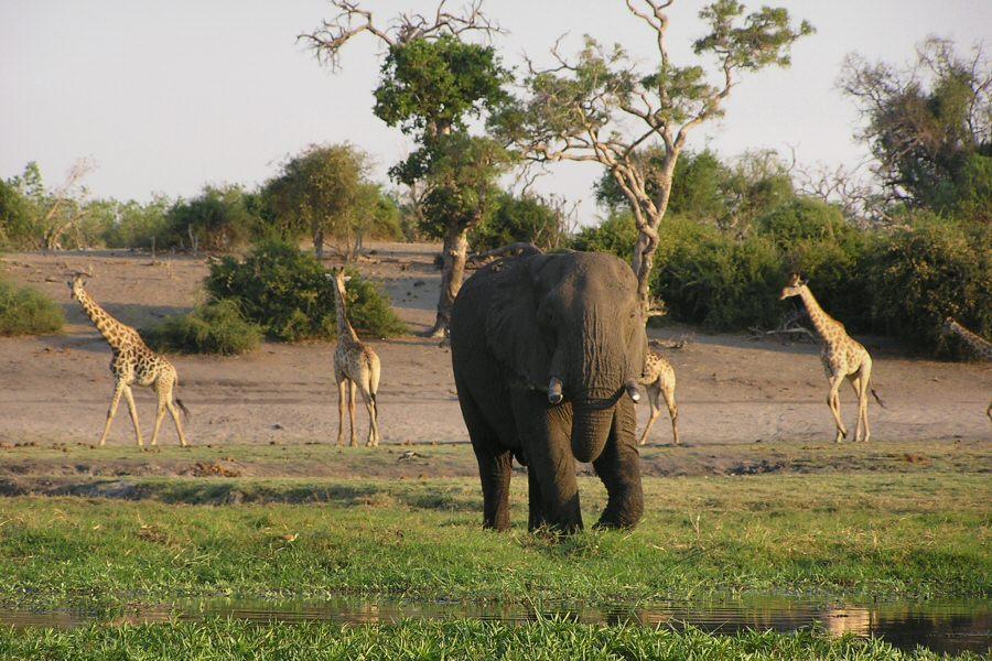 P1010044 elephant and giraffe - ExplorationVacation