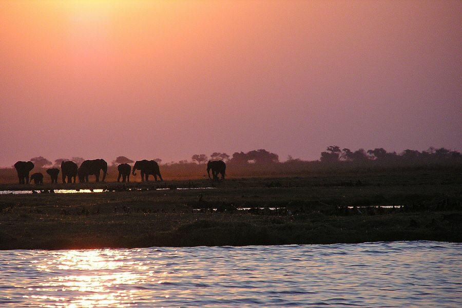 P1010066 elephants at sunset - ExplorationVacation
