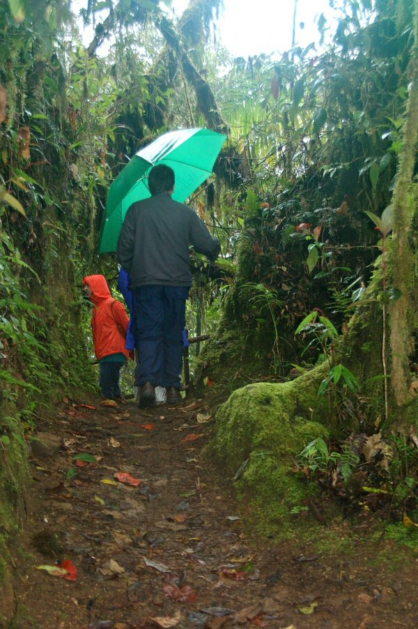 Ecuador cloud forest - ExplorationVacation 2006-01-09_13_24_05