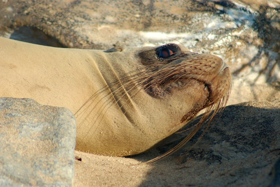 Galapagos Islands - ExplorationVacation 2006-01-05_08_17_00 sea lion.0
