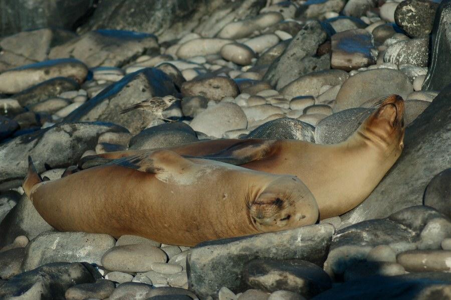 Galapagos Islands sleeping sea lions