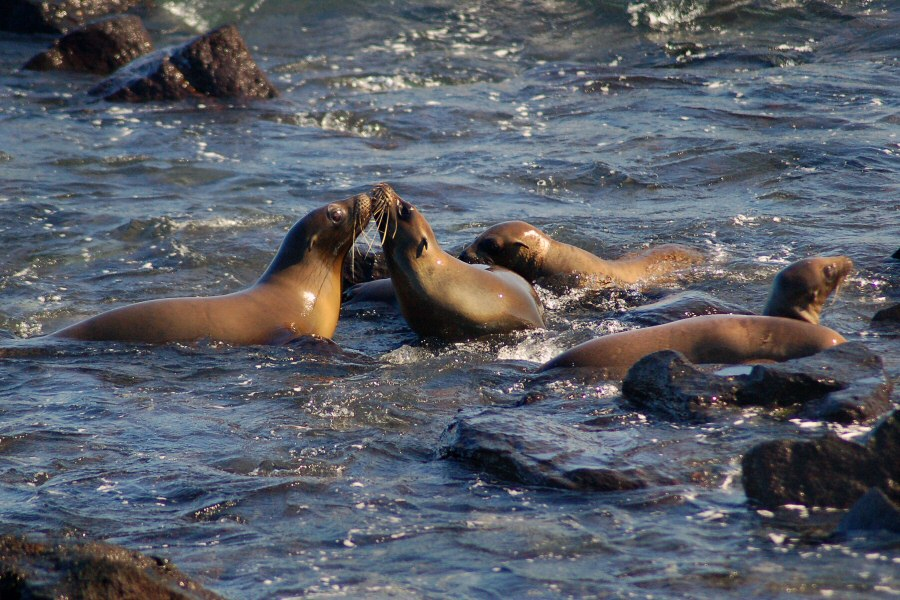 Galapagos Islands - ExplorationVacation 2006-01-05_10_05_48 sea lions