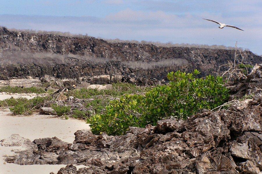 Galapagos Islands - ExplorationVacation P1010017