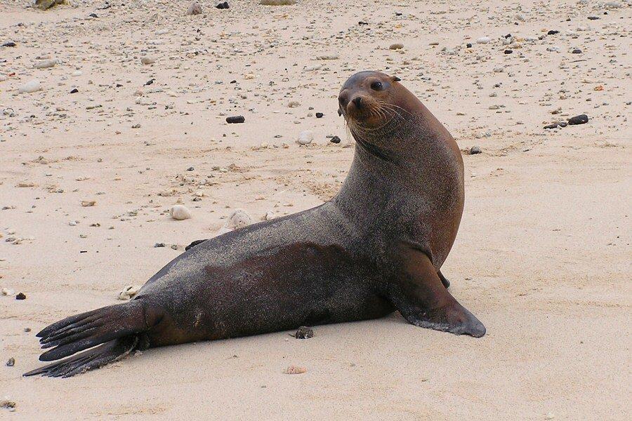 Galapagos Islands - ExplorationVacation P1010078_0