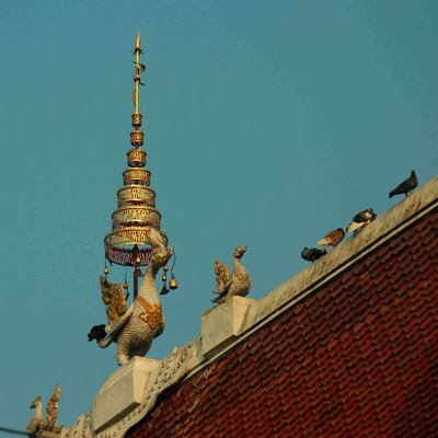 decorative features and birds on a roof