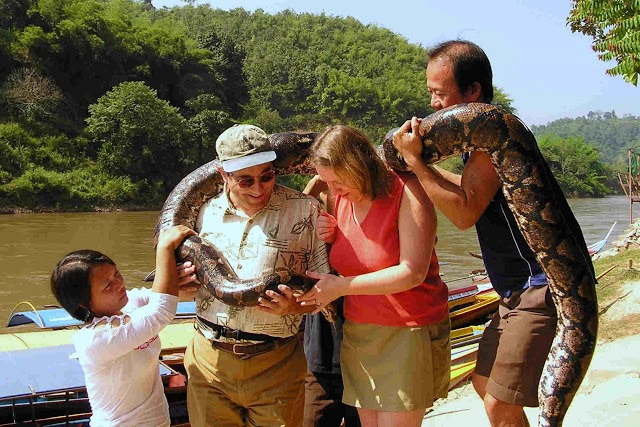 couple being wrapped in a boa constrictor