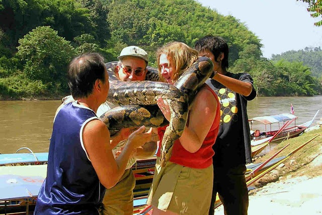couple being helped with a huge boa constrictor