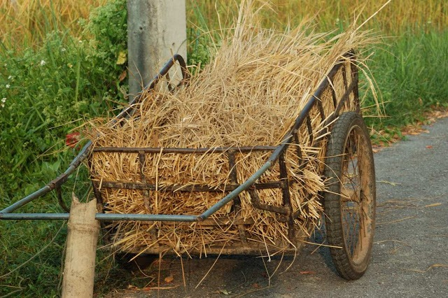 cart loaded with stalks from rice