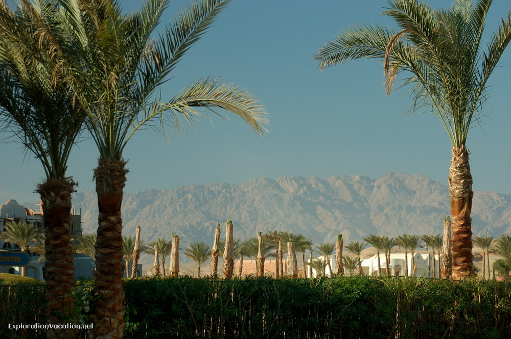 New development with palm trees and mountains in the background