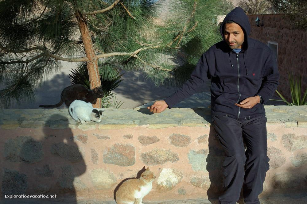 Romani and cat