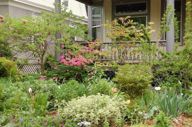 front garden in spring -