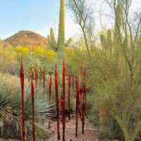 red glass torches amid saguaros with mountains in the background