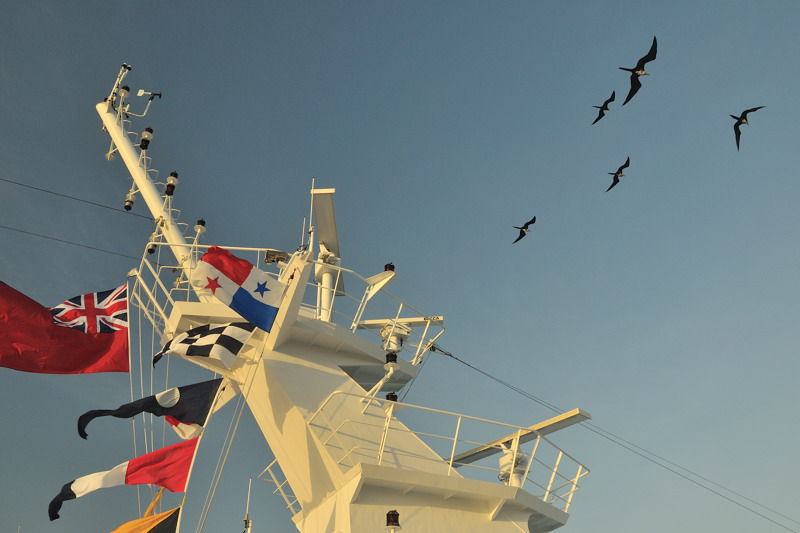 Frigate birds above a ship