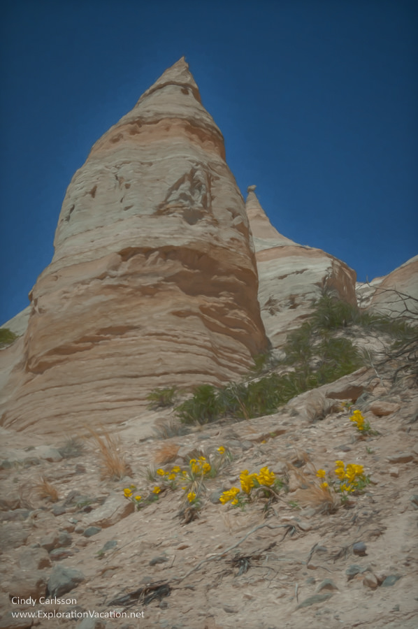 Flowers at Tent Rocks