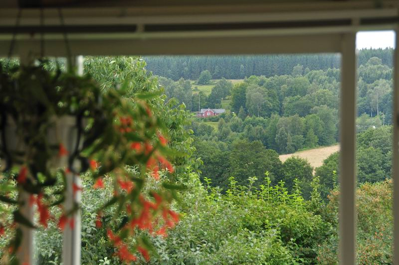 view of forested hillsides through a window