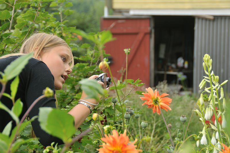 girl photographing dahlias