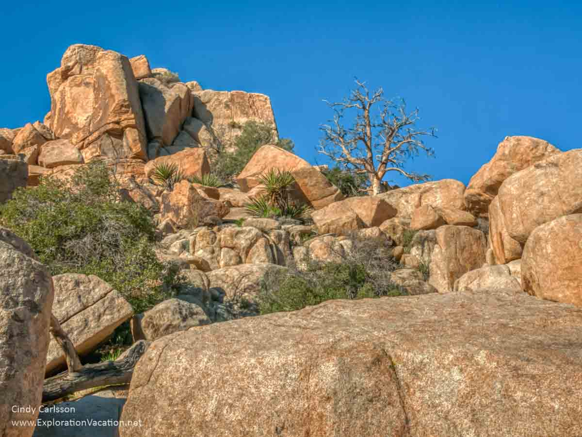large boulders with plants at Joshua Tree