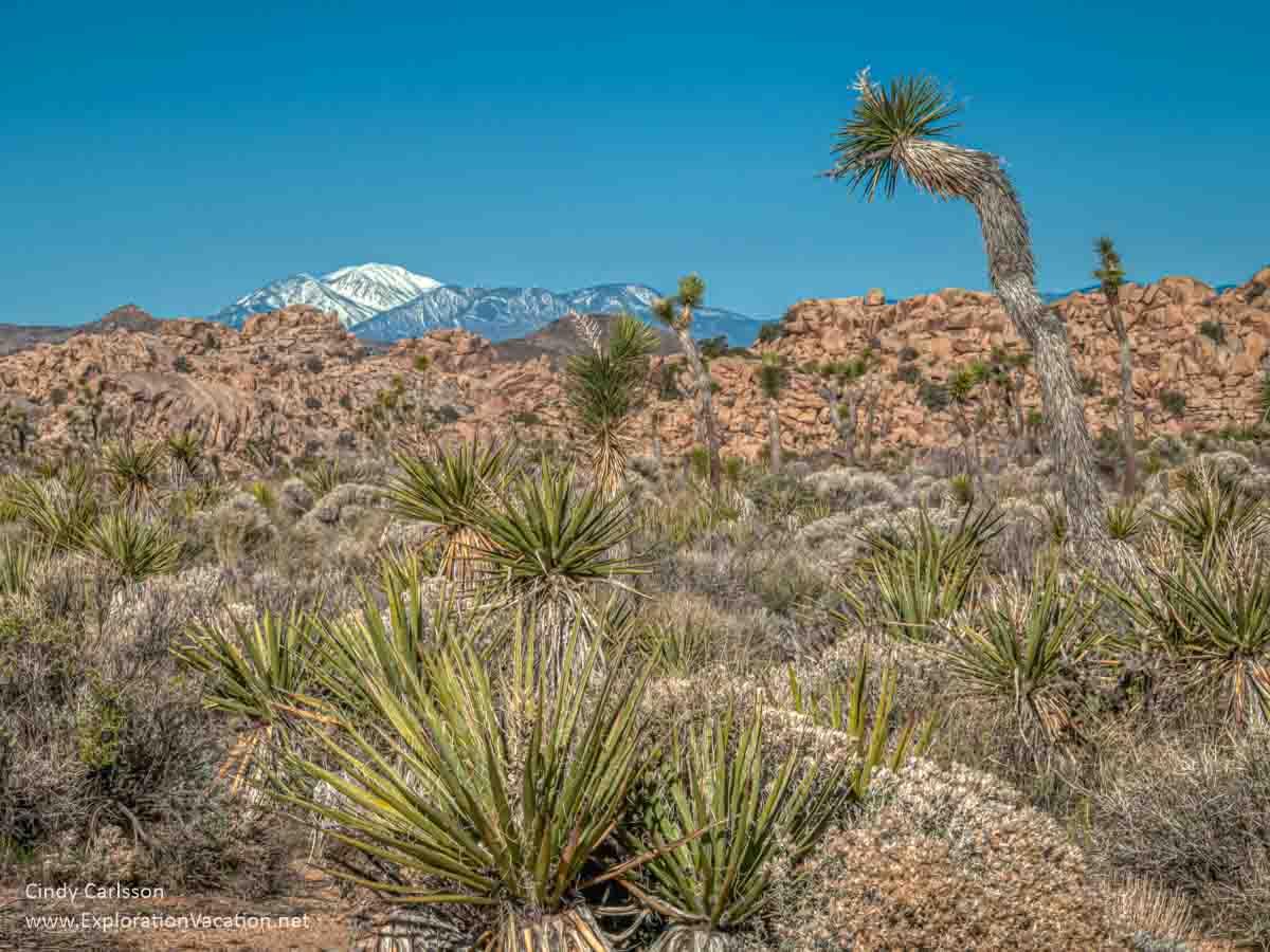 desert vista with distant mountains