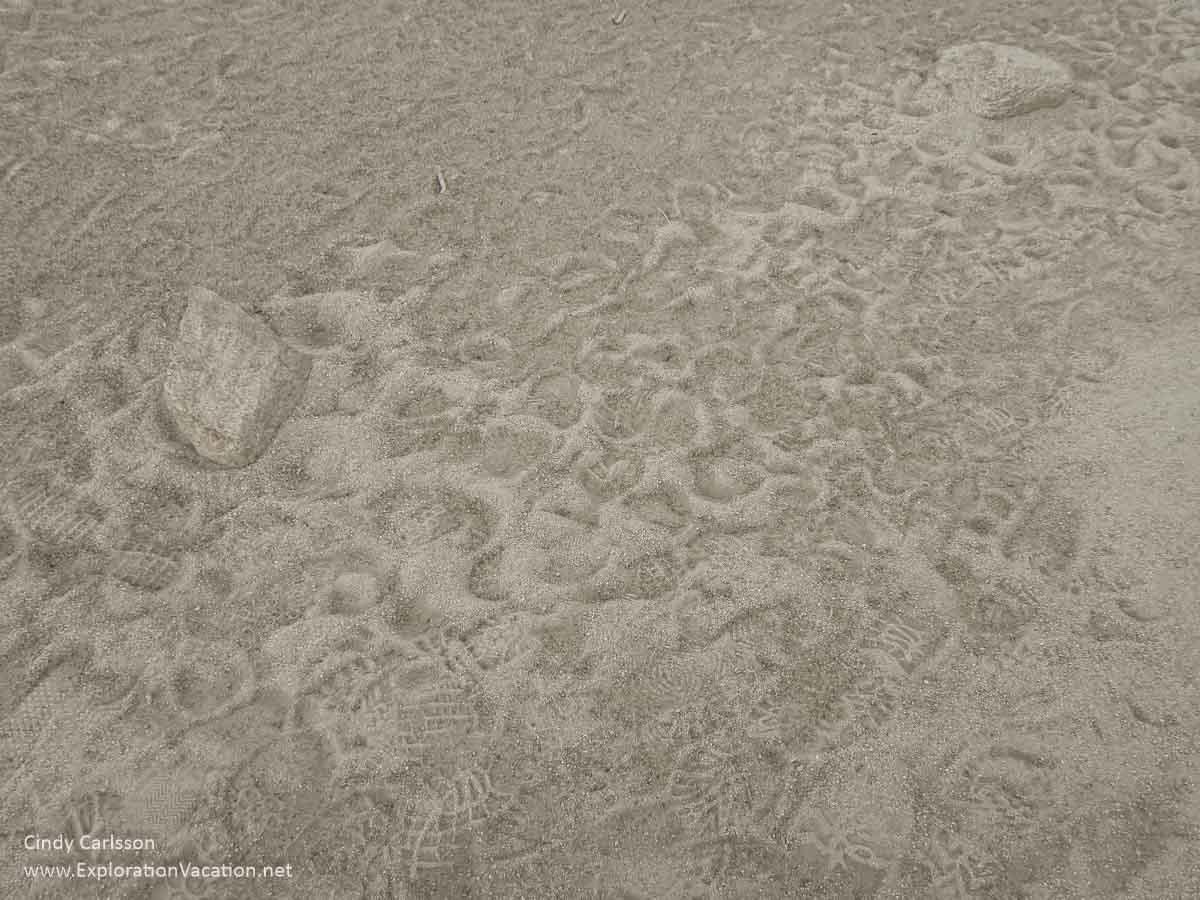 animal and human footprints in Joshua Tree National Park