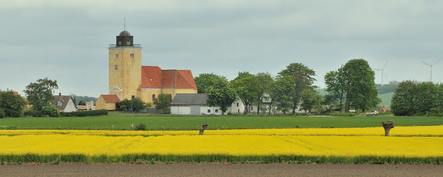 canola fields in bloom with village church