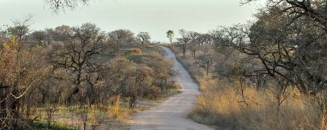 Road in South Africa's Kruger National Park - ExplorationVacation.net