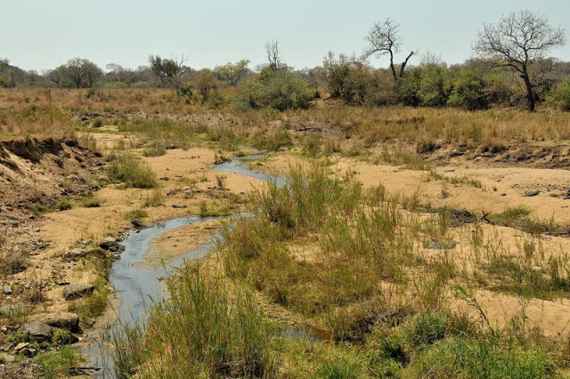 Water in Kruger National Park, South Africa - ExplorationVacation.net