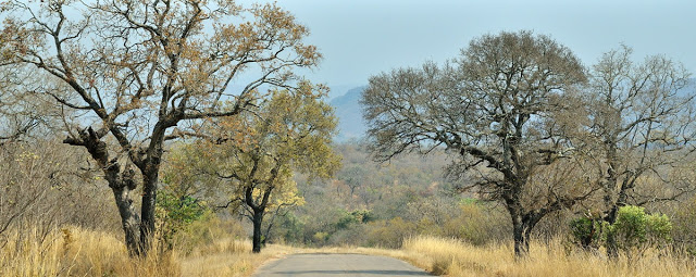 Kruger National Park, South Africa - ExplorationVacation.net