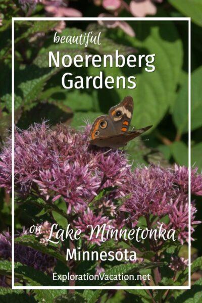 "butterfly and milkweed with text ""beautiful Noerenberg Gardens on Lake Minnetonka Minnesota"""