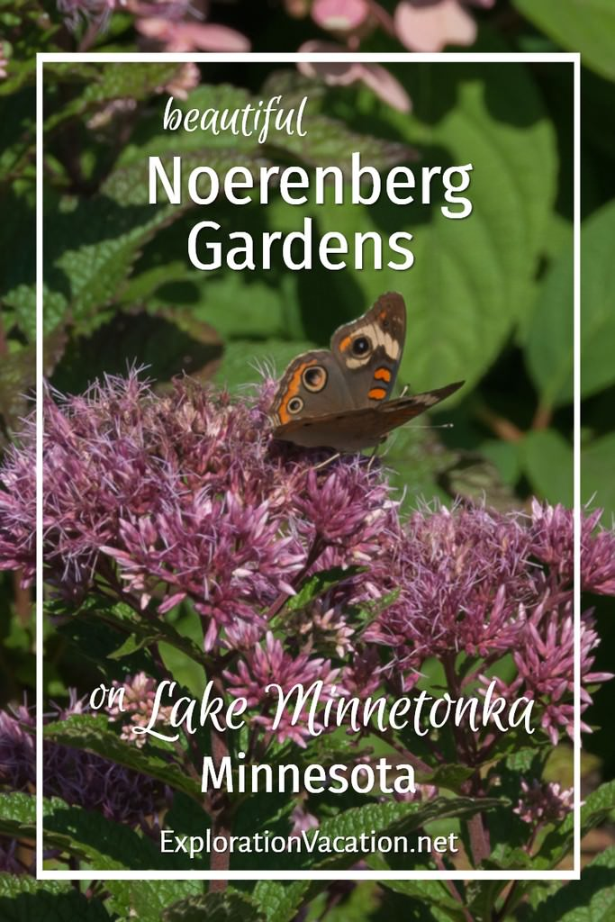 "butterfly and milkweed with text ""beautiful Noerenberg Gardens on Lake Minnetonka Minnesota"""