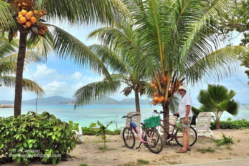 bikes under palm trees on beach