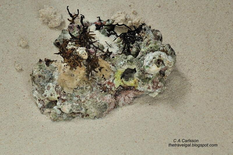 coral on beach