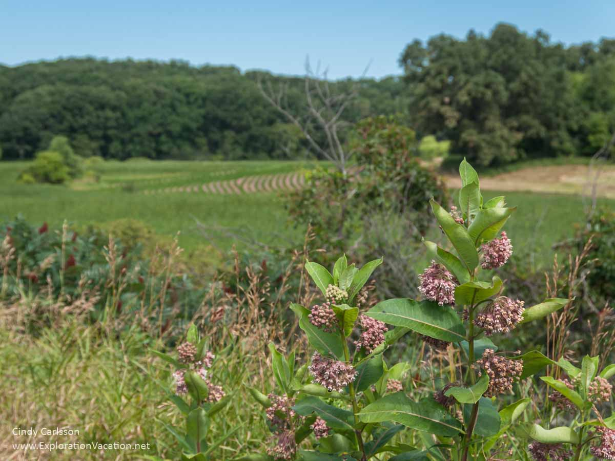 meadows, woodlands, and milkweed
